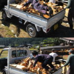 風呂の焚きつけ用木材を大量撤去(捨てる神あれば拾う神あり)