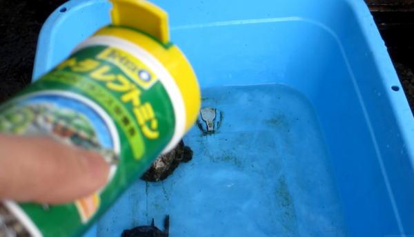 亀の餌やり