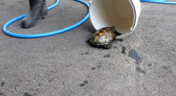 亀をつかまえる